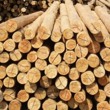 Mintroad Sawmills - CCA Treated - Fencing - Droppers - Greenish